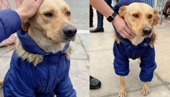 Piden ayuda para perrito que espera a su dueño internado en el Hospital Almenara