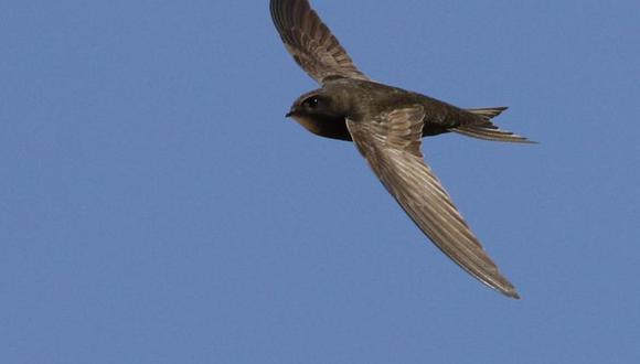 Esta ave tenía un gran secreto que acaba de ser descubierto por científicos.