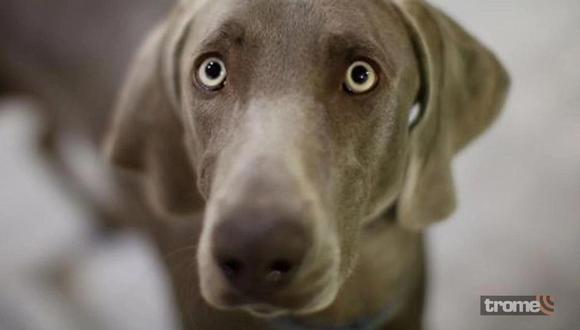 Un perro con los ojos abiertos. El perro es uno de los animales más comunes en los sueños.
