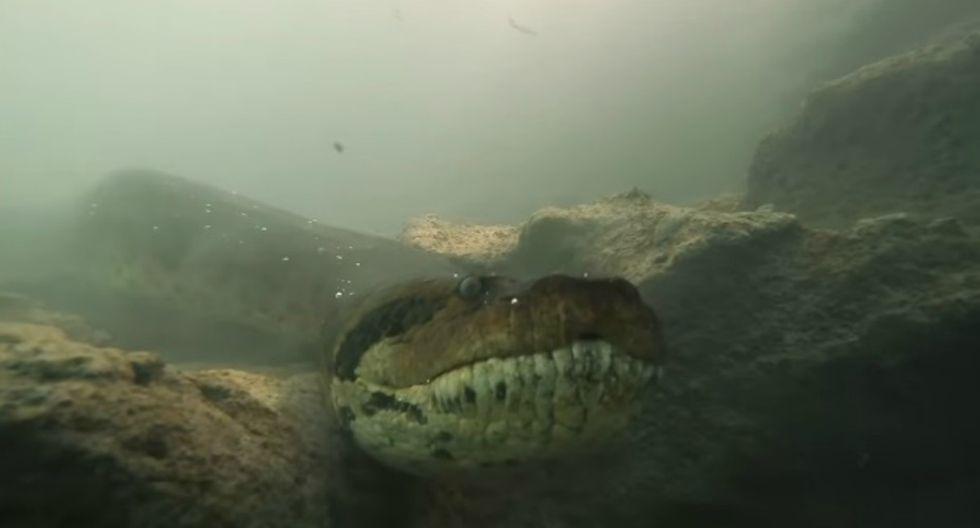 Se hizo viral en Facebook el registro de unos buzos que se encontraron con una anaconda en un río de Brasil. (Foto: Captura)