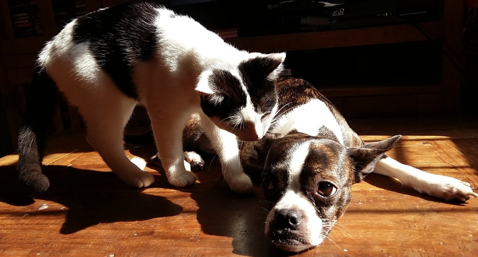 Un gato quedó anonadado por la conducta de su amigo perro mientras dormían plácidamente. (Foto: Pixabay/Referencial)