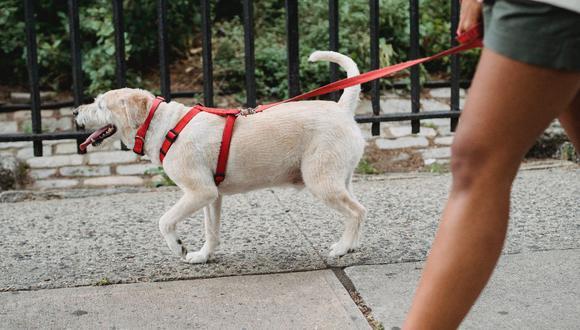 Limpia las patas de tu perro con agua o toallitas desinfectantes sin alcohol. (Foto: Pexels)