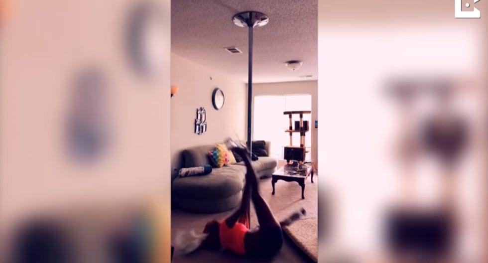 Loro atacó a su dueña en medio de su rutina de pole dance. (YouTube | Caters Clips)