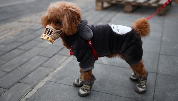 Un perro lleva una tapa hecha en casa sobre su hocico, que su propietario dijo que era una medida preventiva contra el coronavirus COVID-19 mientras está parado en una acera en Beijing. (Foto: AFP)