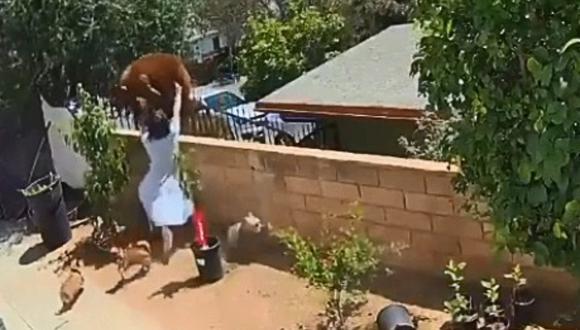 Joven de 17 años se enfrenta a un oso para salvar a sus perros en California, Estados Unidos. (Foto: Citlally Morinico)
