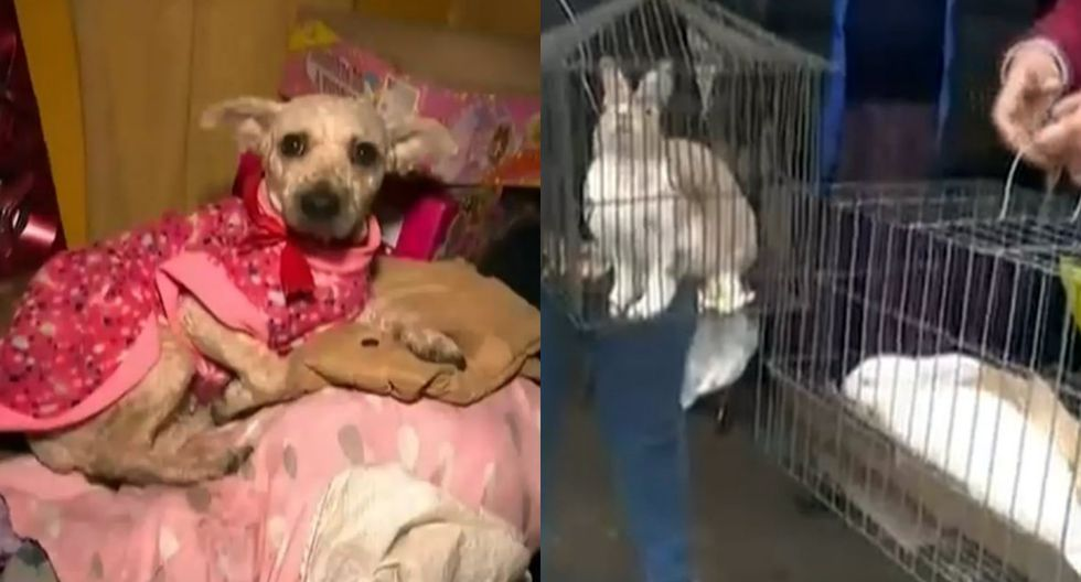 Rescatan a tres conejos y cuatro perritos de dantesco incendio en el Callao. Foto: Captura de ATV Noticias