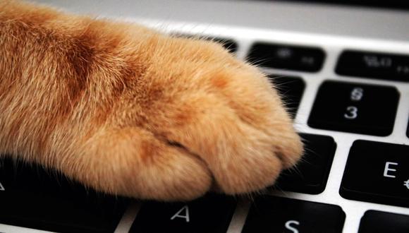 Si el gato se acerca cuando te has sentado frente a la laptop, puede que busque atención. (Foto: Pexels)