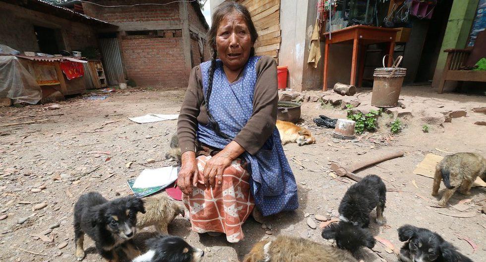 Cusco. Paula Sotomayor solo tiene como compañía a sus perros y gatos. (Juan Carlos Sequeiros)