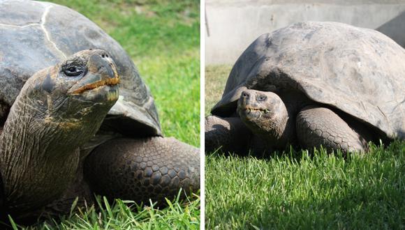 Tiene más de 100 años y pesa cerca de 220 kilos