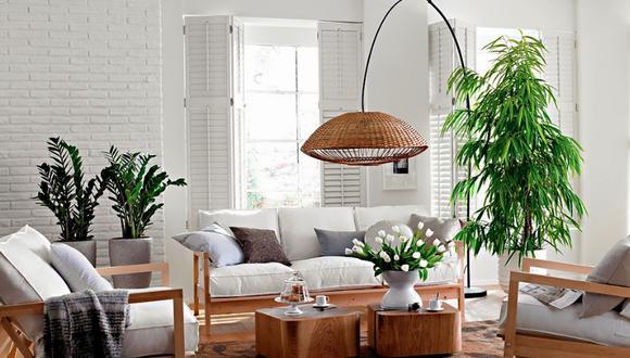 Las plantas de interior también tienen la capacidad de limpiar el aire contaminado de productos químicos nocivos para la salud (Foto: pixabay)