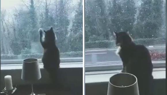 El gato, de nombre Sox, no se percató que la ventana estaba cerrada. (Foto: Caters Clips   YouTube)