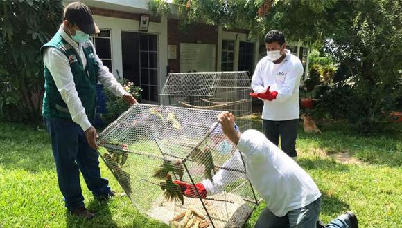 Las 13 aves se encontraban encerrados en una diminuta jaula y tras su rescate fuero trasladados al zoológico Cecilia Margarita de Piura (Foto: Minagri)