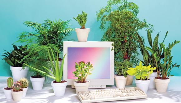 Plantas en el trabajo