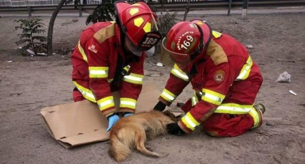 Los bomberos atendieron muchas emergencias referidas a mascotas. La mayoría se dio en Lima.