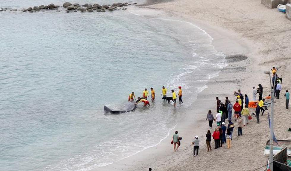 La Municipalidad Distrital de San Bartolo informó que tras varias horas de observación, el animal varó en playa Santa Rosa en Punta Negra, pero sin vida. (Foto: Facebook)