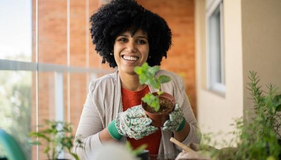 Si quieres cultivar varias plantitas a la vez y ya no tienes macetas, puedes utilizar diversos productos como baldes o botellas de plástico.