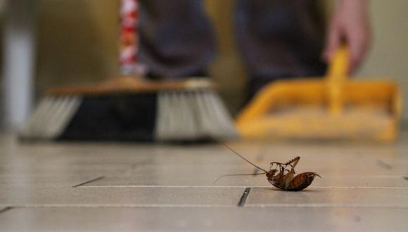 ¿Cómo eliminar o matar cucarachas de tu hogar para siempre? Los mejores métodos