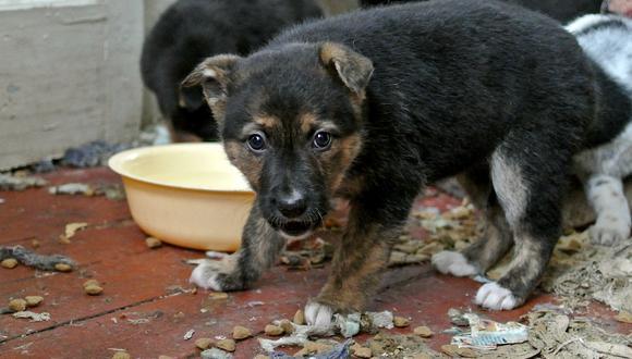 La causa más razonable por la que tu perro entierra su comida es para protegerla de otros. (Foto: Flickr)