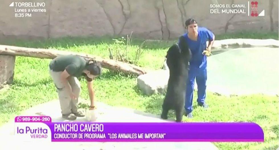 """Pancho Cavero sobrevive a """"ataque"""" de oso de anteojos gracias a su amor por los animales"""