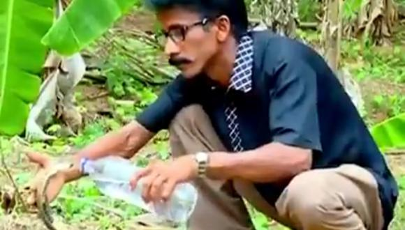 Un video viral muestra cómo un hombre da de beber agua a una sedienta cobra. | Crédito: @susantananda3 / Twitter.