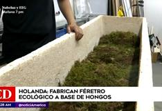 Holanda: primer ataúd a base de hongos que convierte cuerpo en abono