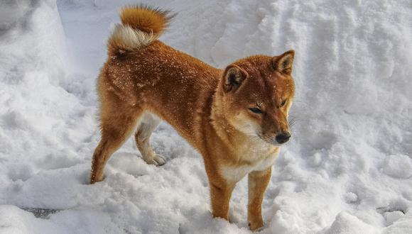 Eran utilizados para la caza en las montañas del centro del país. Foto: Pixabay.