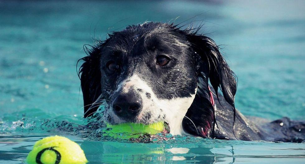 El video del can asombró a muchos internautas. (Foto: Referencial - Pixabay)
