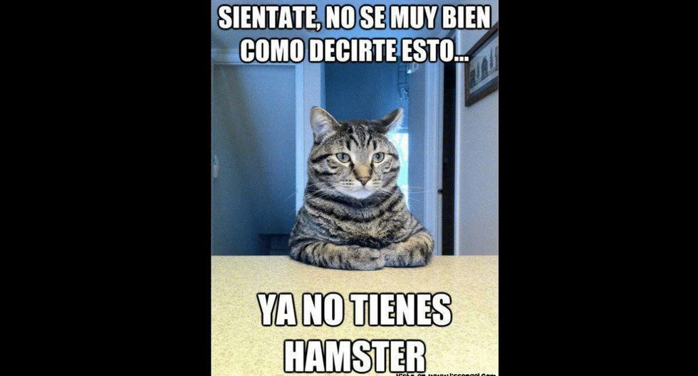 El Día del Gato no se celebra únicamente cada 8 de agosto, sino en otras dos ocasiones al año. (Foto: Facebook)