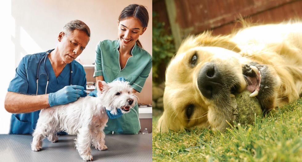 Es importante vacunar a tu perrito.