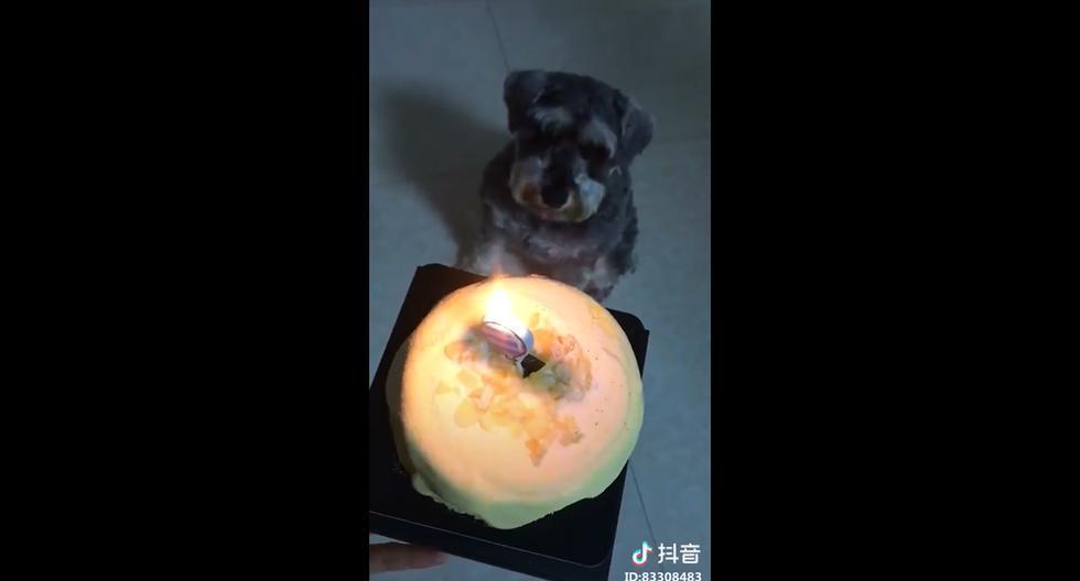 """Esta niña china enternece las redes al cantar singular versión del """"Happy birthday to you"""" a su perrito. (Facebook)"""