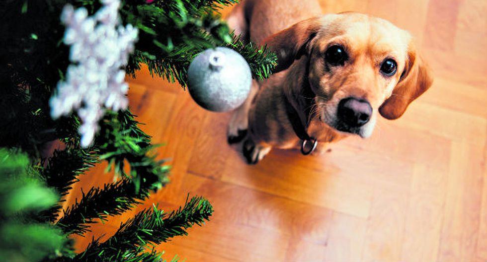 En estas fiestas de fin de año debemos tener especial cuidado con nuestras mascotas.