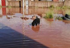 Juliaca: Perritos abandonados sufren por lluvias y beben agua empozada para sobrevivir | FOTOS