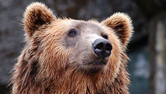 El oso entró a la cabaña y se sumergió en el jacuzzi que una mujer había preparado para relajarse. (Foto referencial - Pexels)
