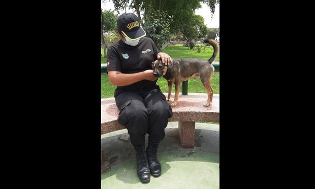Es la cuarta vez que serena de Santa Anita realiza una intervención a delincuentes. | Foto: Violeta Ayasta