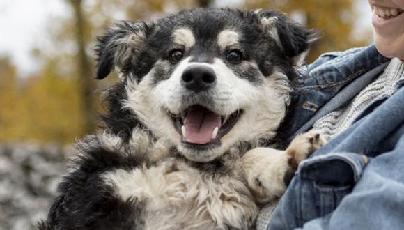 Observando la dentadura de un perro podemos estimar la edad aproximada, pero hay casos que al haber tenido una mala alimentación y sus dientes se desgastan no podría saberse con exactitud (Foto: Freepik)