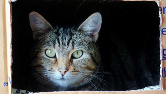 La búsqueda de espacios confinados es un comportamiento instintivo de los gatos. (Pixabay)