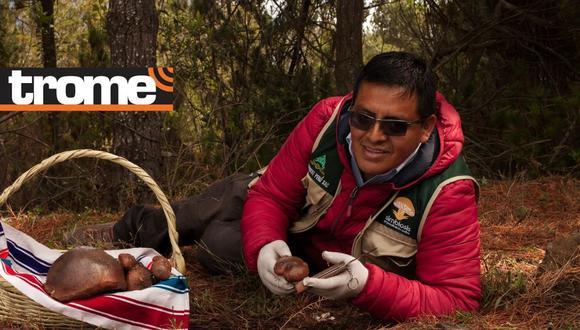 El aprovechamiento de un recurso natural hizo que las mujeres que posean plantaciones de pino que tengan la potencialidad de producir setas y hongos de la variedad boletus lúteos, pueda mejorar sus ingresos y calidad de vida.  Foto: Perumin Inspira.