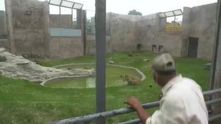 Día del Padre: cuidadores del Parque de Las Leyendas celebraron rodeados de animales