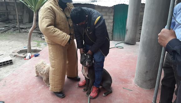 Geresa reportó 4500 ataques de perros durante el año pasado en Arequipa (Foto: Yaku Noticias)