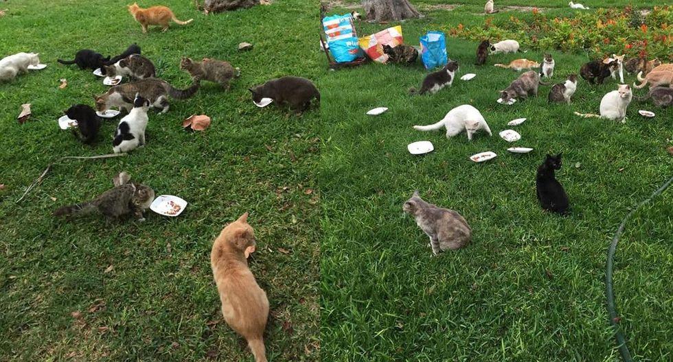 No hay de que preocuparse, los gatos permanecen en el parque Kennedy. (Facebook Gatos Kennedy Lima)