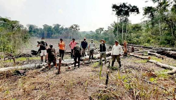 San Martín: Detectan que actividades agrícolas provocaron deforestación de seis hectáreas de bosques (Foto: Ministerio Público)