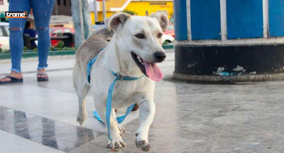 Chato, el perro que esperó más de un mes a su dueño en hospital de Huacho sin saber que murió | Fotos: TROME
