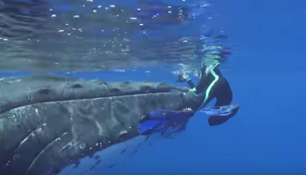 Bióloga marina es salvada de la muerte por una ballena jorobada.