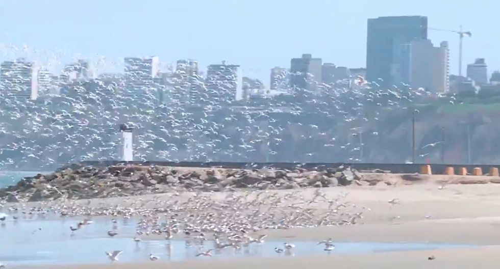Así lucen playas como Agua Dulce. ( Fotos: GEC)