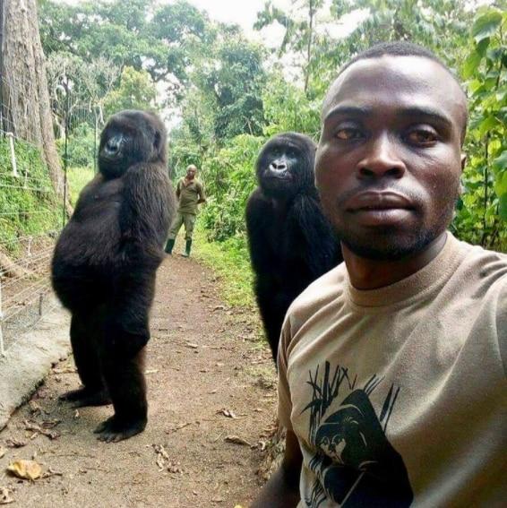 La gorila Ndakasi posando con otra compañera, de nombre Ndeze, y acompañada de los cuidadores del Parque Nacional de Virunga (PNVi). (Foto: Virunga National Park)