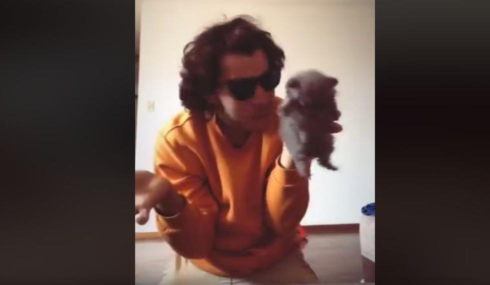 YouTuber utiliza a gatito en polémico video y lo acusan de promover el maltrato animal