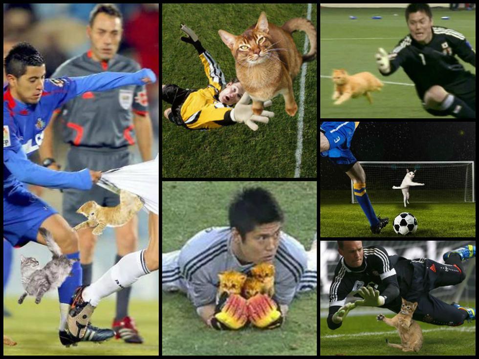 Fútbol y photoshop: Cuando los gatos invaden el campo de juego [FOTOS]