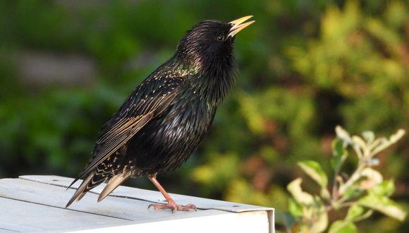 A diferencia de muchos humanos, el ave sí sabe cómo reciclar.(Foto: Pixabay)