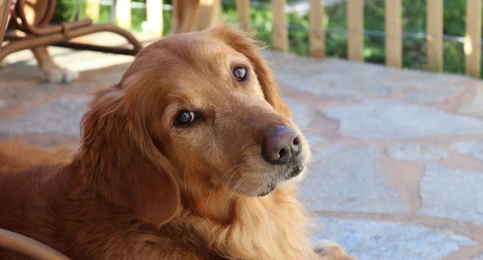 El perro aprovechó que su dueña no estaba para comer una galleta que dejó en el piso. (Pixabay)